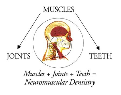 Diagram of neuromuscular dentistry